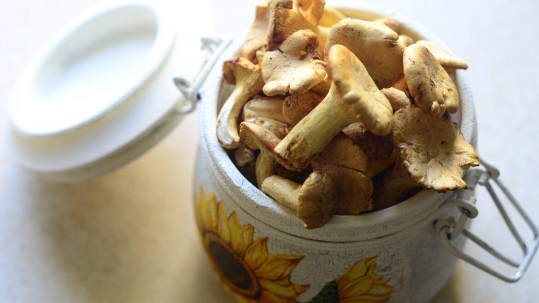 Świeże grzyby kurki