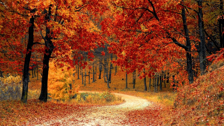 Widok na piękny, jesienny las w kolorach żółtym i pomarańczowym.