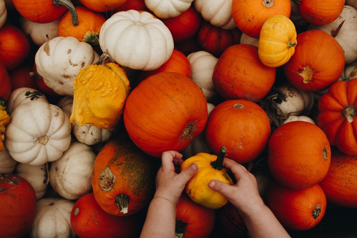 Jesienne dynie w różnych kolorach. Dynia biała, żółta i pomarańczowa.