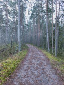 Tydzień Metamorfozy - las